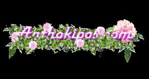 Anthokipos.com - Λουλούδια online!